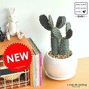 【多肉植物】 ウチワサボテン 2本立ち 墨烏帽子 白色丸型陶器鉢に植えた コンパクトな 柱サボテン セレウス サボテン バンザイサボテン