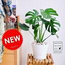 手のひら型のおもしろい葉。育てやすい植物です!