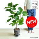 当店一番人気の観葉植物・ハートの形の可愛い葉っぱが特徴です。