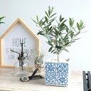オリーブ エスニック モザイクキューブ陶器 白×青 陶器鉢・植木鉢・四角・スクエア・モザイク柄・ホワイト・ブルー・オリーブの木・観葉植物