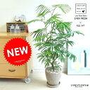 スタイリッシュな育てやすい観葉植物です。