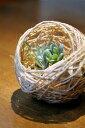 【鳥の巣風】消臭ヒバチップ巣ボール【売れ筋】