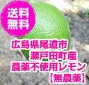送料無料 無農薬レモン 3kg 20-35個 広島県尾道市瀬戸田町高根島産 【ハウス栽培だから皮がキ
