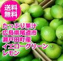 【ハウス栽培なので 果皮が柔らかく果汁たっぷり】広島県尾道市瀬戸田町産レモン 1k