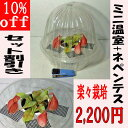 【10%off】 食虫植物 観葉植物 【面白植物】  ネペンテスとミニ温室セット 【自由研究】