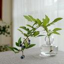 マリメッコ marimekko 小さい 花瓶 フラワーベース クリア 067642 100 北欧 フィンランド 手吹きガラス 透明 ガラス 一輪挿し