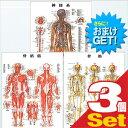 (さらに選べるおまけGET)(検査・医療器具)医道の日本社 人体解剖学チャート骨格筋 ポスター 3枚セット(骨格筋・骨格・神経図) パネルなし - 縦86×横62cm 表面仕上げはラミネート加工。