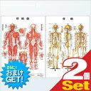 (さらに選べるおまけGET)(検査)医道の日本社 人体解剖学チャート骨格筋 ポスター 2枚セット(骨格筋・骨格) パネルなし - 縦86×横62cm 表面仕上げはラミネート加工。