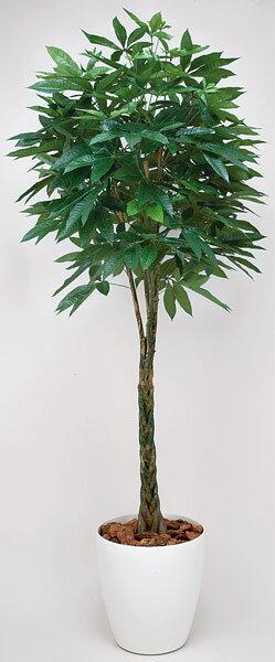 ★送料無料★ パキラ 観葉植物 200cm 光触媒 防臭 抗菌 緑 C3703-500
