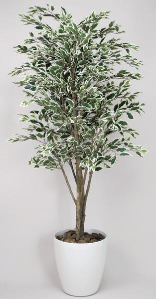 送料無料 ベンジャミン 観葉植物 180cm 光触媒 フロア C3606-350