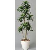 ★★ ドラセナコンパクタ H160cm 鉢植え W3A5704-360