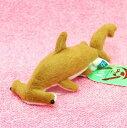 シュモクザメ吸盤 サイズ:15cm