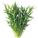 【送料無料】【代引き不可】【DM便発送】ユーイング Green Farm用種子(水菜) UH-LB02【楽天最安値に挑戦】