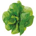 【送料無料】【代引き不可】【DM便発送】ユーイング Green Farm用種子(サラダ菜) UH-LA06【楽天最安値に挑戦】