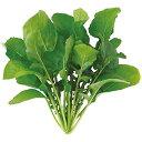 【送料無料】【代引き不可】【DM便発送】ユーイング Green Farm用種子(ルッコラ) UH-BC02【楽天最安値に挑戦】