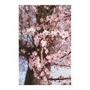 ウォールステッカー MU3アクセント壁紙 桜の木 ph2076☆ さくら サクラ 春 景色 風景 緑