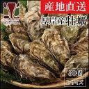 【厚岸産】牡蠣Lサイズ 30個セット
