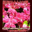 【誕生日】【ピンク】【バレンタインデー】【〜本】御祝・誕生日・記念日に新品種スターカーネーション!10本以上の花束【送料無料】【smtb-TD】【saitama】【】