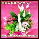 【春の花鉢】【夫婦】【御中元】【花鉢 バスケット】ボリュームあります! 季節の花鉢の寄せ鉢バスケット