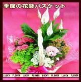 【お歳暮】【夫婦】【クリスマス】【花鉢 バスケット】ボリュームあります! 季節の花鉢の寄せ鉢バスケット寄せ!【】【smtb-TD】【saitama】御祝・記念日・結婚祝い プレゼン