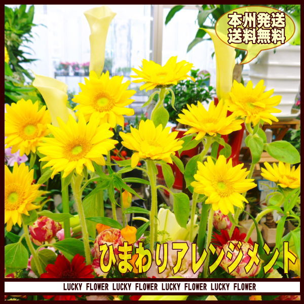【父の日】【ひまわり】ひまわり 黄色×オレンジ...の紹介画像2