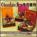 人気上昇中!多肉植物 チョコレートBOX【送料無料】【smtb-TD】【saitama】【インテリア】【バレンタイン】【多肉】【ひな祭り】