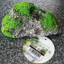 アクアリウム ベースロック コトブキ工芸 KOTOBUKI 人工石 アクセサリー レイアウト 水槽 メダカ