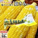 【ポイント5倍】 嶽きみ(真空パック) Sサイズ 10本 青...