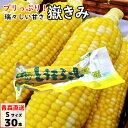 【ポイント5倍】 嶽きみ(真空パック) Sサイズ 30本 青...