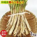 沖縄産 島らっきょう(生)1kg