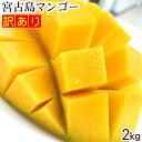 【送料無料】宮古島産!訳ありマンゴー2kg (アップルマンゴー)
