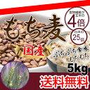 【送料無料】国産 もち麦 5kg もちむぎ ごはん 大麦 押麦 押し麦 米 穀物 食物繊維 送料無料 もち麦ごはん 02P03Sep16