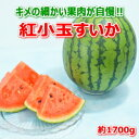 熊本県産 紅小玉すいか  約1700g