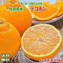【送料無料】佐賀県産 デコポン5〜6玉 約1.5kg【デコポ...