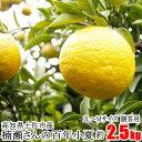 贈答用 楠瀬さん 百年小夏 2L〜Mサイズ 約2.5kg 高知 土佐市 こなつ 小夏 日向夏 ニューサマーオレンジ まる庄果樹園
