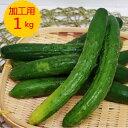 単品 きゅうり 加工用(キュウリ 漬物用)1kg