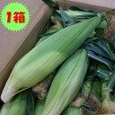 クール便送料込み!【送料無料】箱売 とうもろこし(トウモロコシ)1箱約5kg(11〜18本程度)