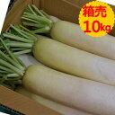 【クール便送料無料】箱売 大根(だいこん・ダイコン)1箱(10kg)