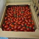 【送料無料】【九州産】箱売り ミニトマト(熊本産 アイコ) 1箱(3kg)業務用、まとめ買いに