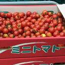 箱売 ミニトマト 1箱3kg 業務用、まとめ買いに