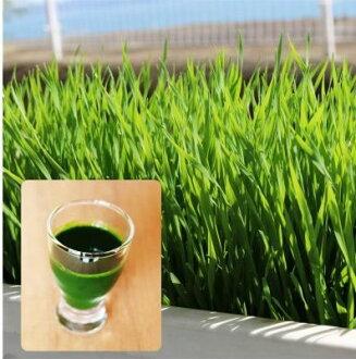 新建專案有機種子小麥草 (果汁及果汁)