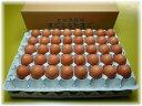 【大寒】送料無料!大寒の日に産んだまごころ卵 80個入り(割れ保証20個含む)1月20日発送のみとなります