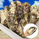 牡蠣 殻付き カキ カンカン焼き 海鮮 バーベキュー セット 広島県産 総量約3kg 大粒 L