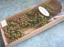 【花材】プリザーブドフラワー 大地農園ペッパーベリープリザーブド1束 グリーンロゼ