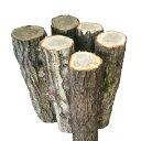 ジャンボしいたけのほだ木 50cm 6本|冬の初めと春先の2回+数シーズンの発生が期待できます。肉厚があるブランドしいたけをご自宅で収穫できます