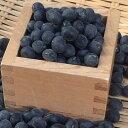 【新豆】平成28年丹波篠山産黒豆3L 1kg