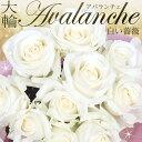 白バラ アバランチェ 国産 大輪 本数を選べる大輪アバランチェの花束 白薔薇 誕生日やお祝い、記念日に年齢分の本数でプレゼント ホワイトローズ 高級
