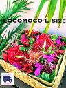 LOCOMOCO-L ハワイアン 花 ギフト 誕生日 送料無料 フラワー ギフト お花 お祝い 開店