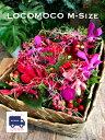 LOCOMOCO-Mハワイアン 花 ギフト 誕生日 送料無料 フラワー ギフト お花 お祝い 開店祝
