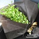 デンファレグリーンの花束 Green Orchid10本
